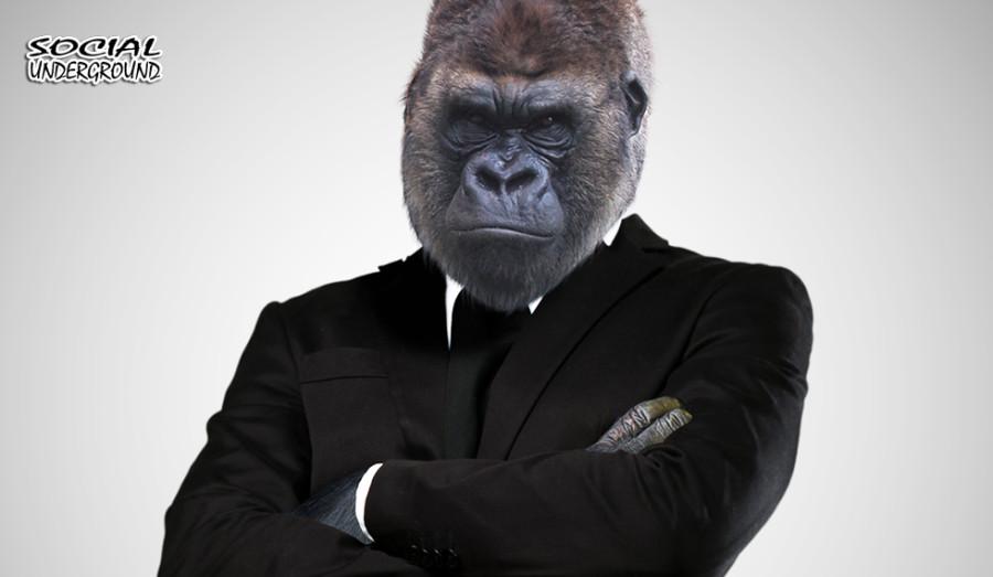 feature_monkeysuit